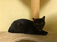 Blackcats_5
