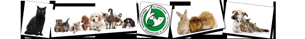 Banner TSV 2